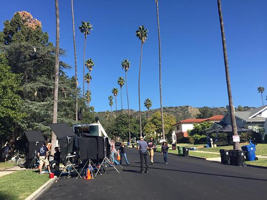 palm-trees-set